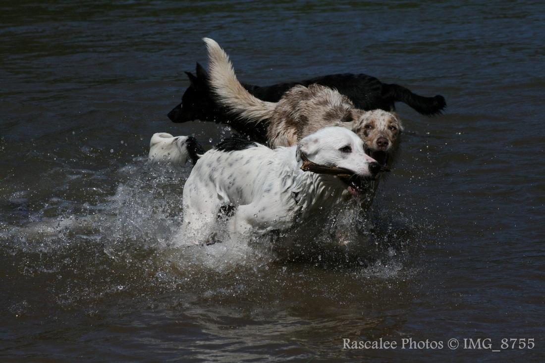 Wagga Dog Show